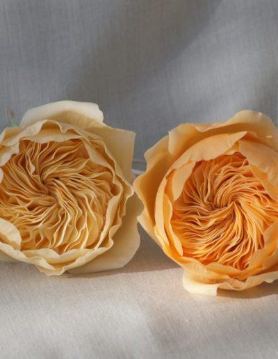 gumpasteroser i gul og orange